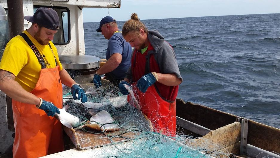 Beautiful How To Get To Cape Cod Part - 11: Cape Cod Tourists No Longer Have To U0027go To Europeu0027 To Get Abundant Local  Fish