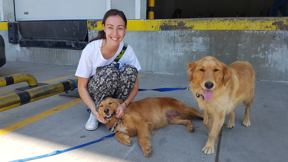 Atlanta (left) and her sister Phoenix lounge with a volunteer outside the cargo hall before leaving Istanbul.