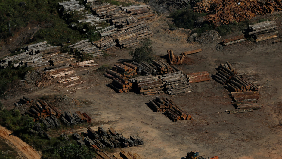 Piles of recently cut-down trees are are seen in Brazil.
