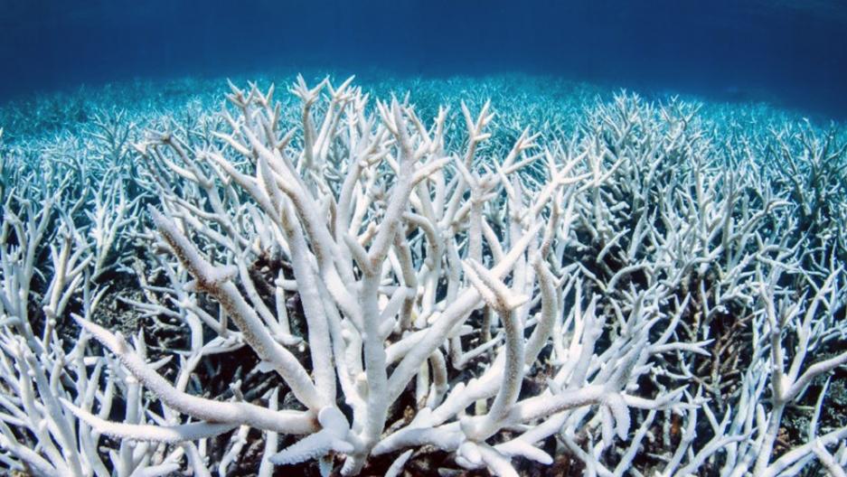 Coral is seen bleached white against the dark blue ocean.