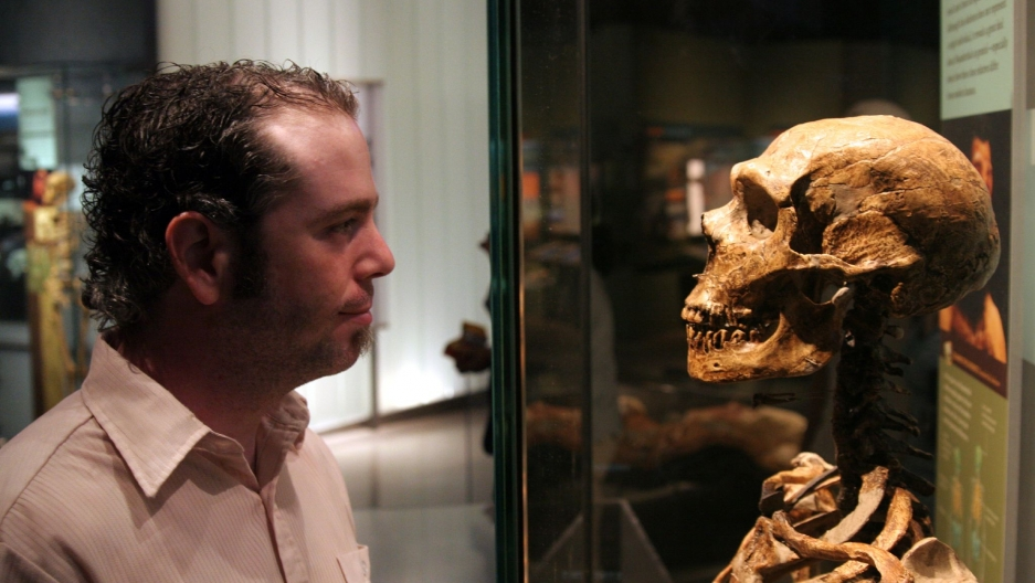 A man looks at a Neanderthal fossil at the American Museum of Natural History in New York.