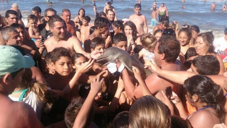 Tourists at a beach in Argentina crowd around a young Franciscan dolphin that was later left dead on the sand.