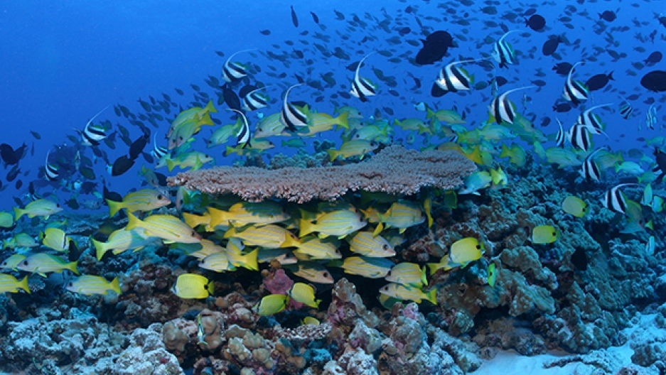 Hawaii coral reef fish