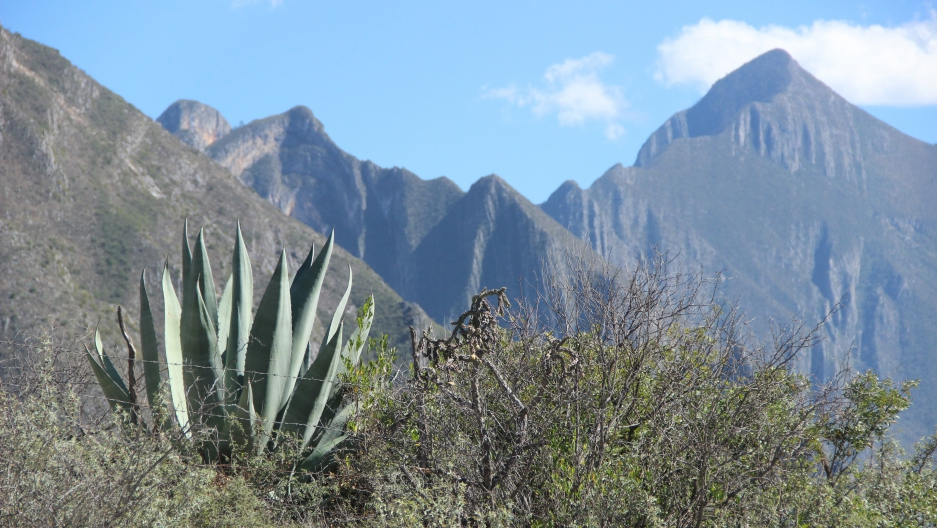 The Nature Conservancy hopes to plant perhaps 100,000 native agave and pine trees in the forests around Monterrey, Mexico's third-largest metro area.