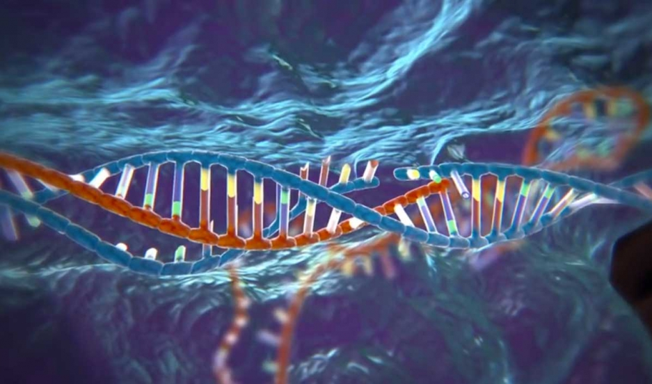 CRISPR is different from other gene editing techniques. It emerged from basic research into how bacteria fight off infections. Scientists realized they could use CRISPR to identify and cut apart specific DNA sequences in any cell.