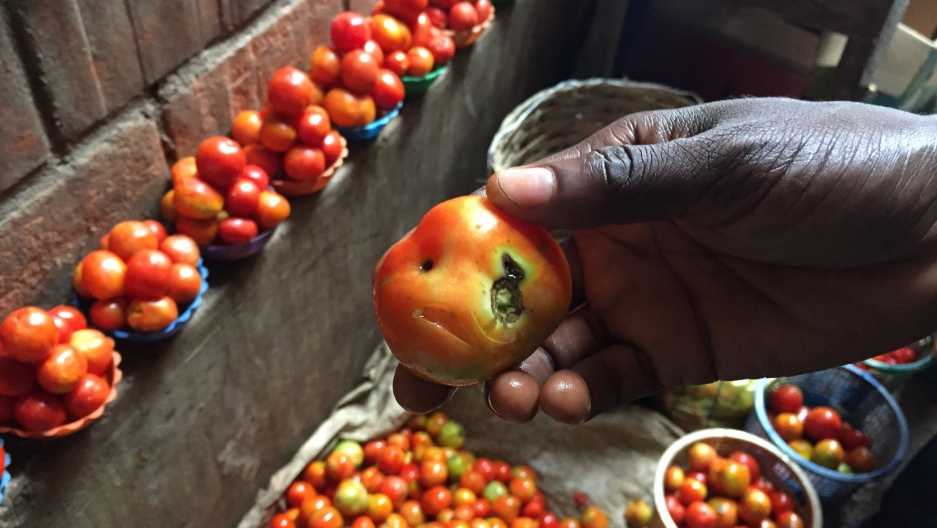 """In a market in Abuja, a vendor named Abba shows me a puny tomato that was selling for 10 times the usual price. Some Nigerians have been calling tomatoes """"Buhari's gold,"""" after the president."""