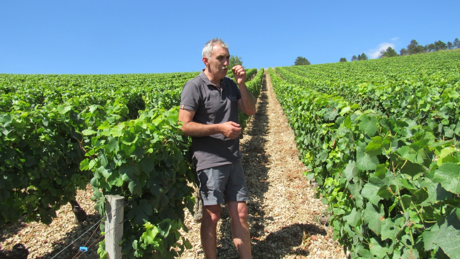 Christophe Ferrari in his vineyard in Irancy