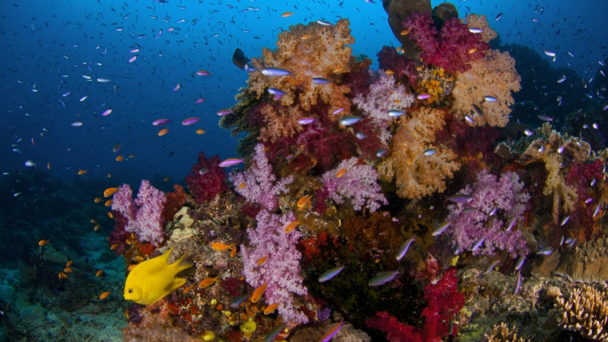 "Healthy corals use chemical signals, or smells, to attract fish. New research has found that corals also send out ""distress"" signals when they're in trouble."