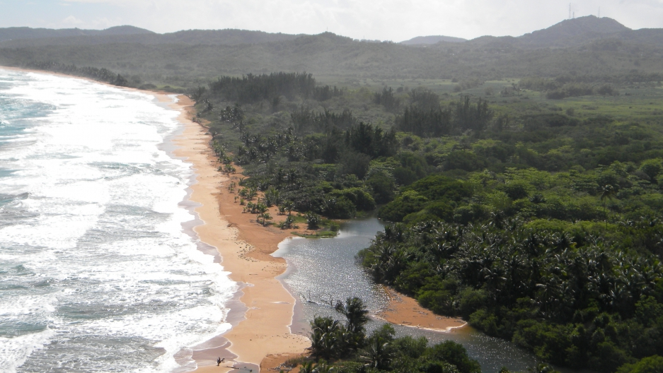 The Northeast Ecological Corridor covers 3,000 acres of prime oceanfront property on Puerto Rico's northern coast. In addition to its scenic and recreational value, it has enormous bilogical significance as a primary nesting ground for the endangered leat
