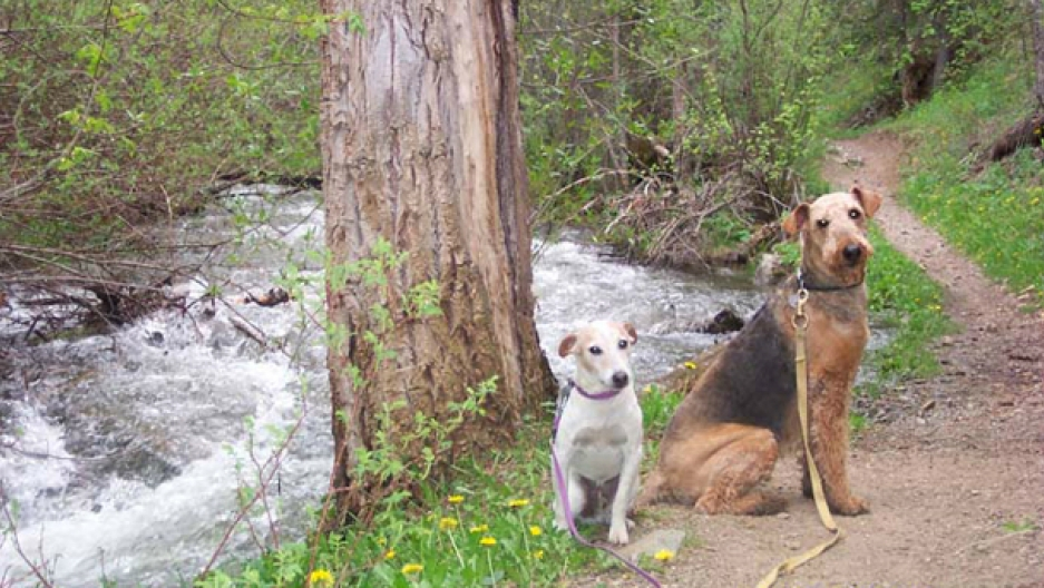 Dogs by creek