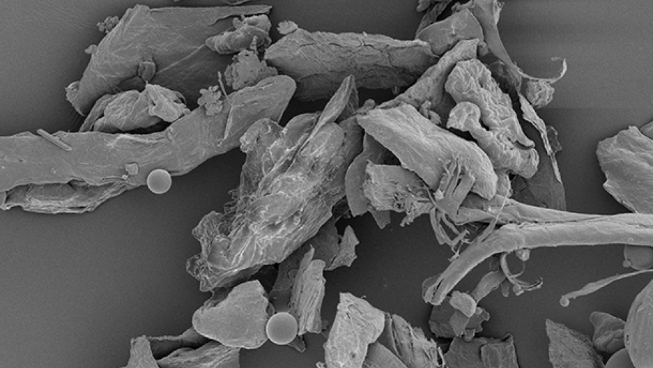House dust magnified