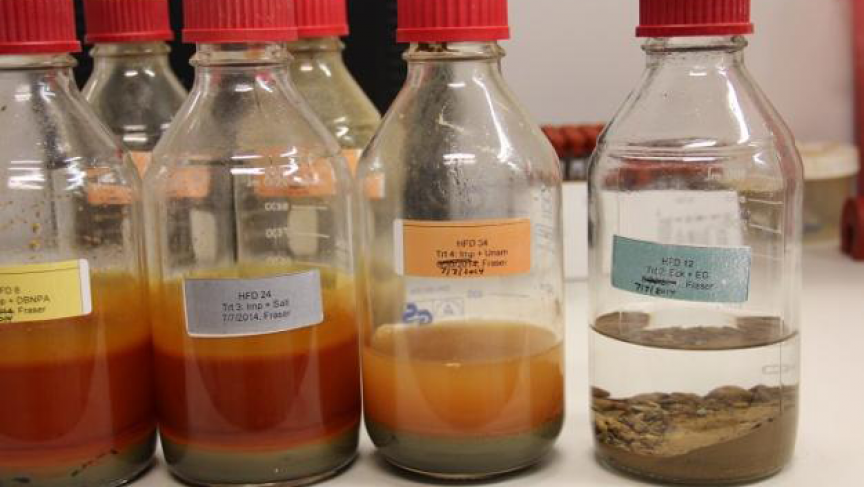 Sediment from a stream bed containing fracking wastewater (jars on the left) developed orange residues after 90 days; sediment from a clean stream bed (jar on the right) did not.