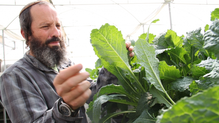 In the desert community of Bnei Netzarim near the Egyptian border, organic farmer Gilad Fine shows off his greenhouse featuring lettuce grown hydroponically on raised platforms.