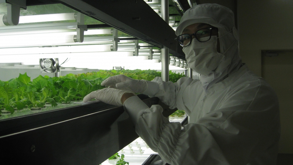 Masahiko Kakutani is now the main grower or farmer behind 'Tokyo Salad,' the Tokyo Metro's new farming enterprise, which is housed underneath the Tozai Line.