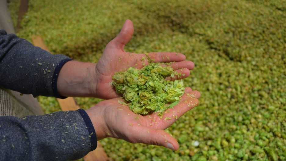 Washington's Yakima Valley produces a quarter of the world's hops, but warming temperutres in the region have growers and brewers concerned about the future of the vital crop.