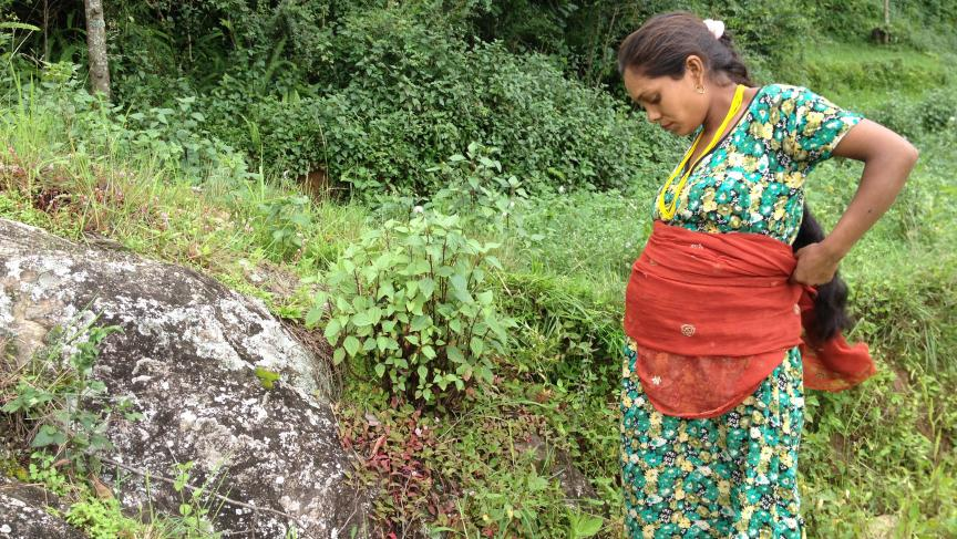 In nepal women still abide by centuries old traditions januka rasaeli a pregnant woman in nepal ccuart Images
