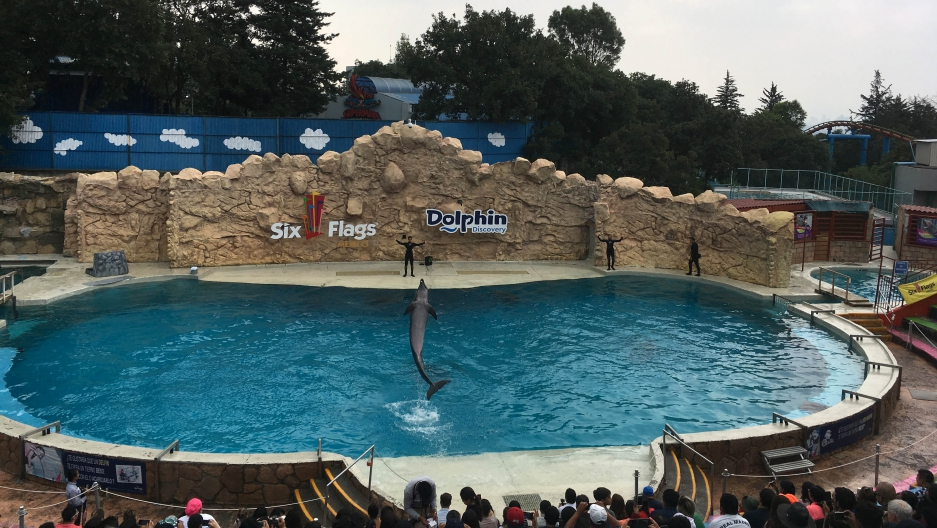 A dolphin performs tricks at a recent Six Flags show in Mexico City.