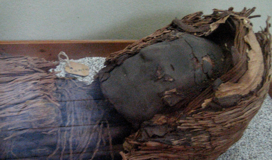 The head of a mummy from the Chinchorro culture, which is found in northern Chile.