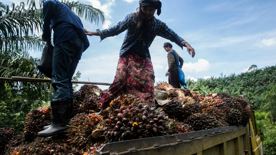 Palm oil workers load palm fruits into a truck at Asia World palm oil plantation in Bank Mae Village, Myanmar, Nov. 11, 2016.