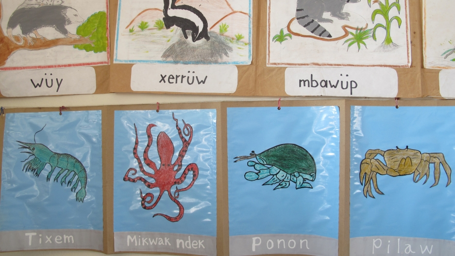 Pictures of local animals on the wall of a bilingual school