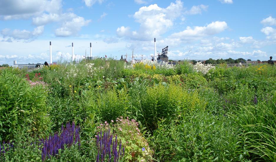 Gardens blanket the roofs of shops in Copenhagen.