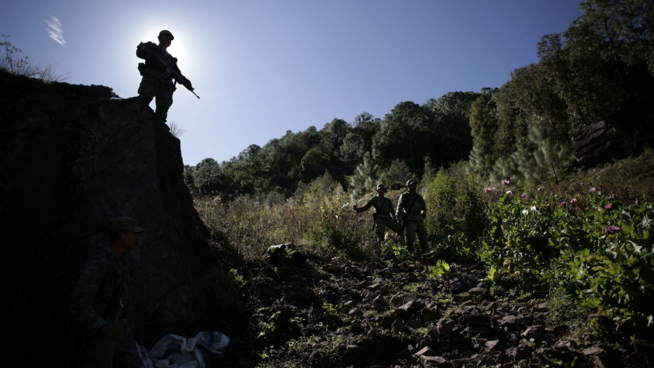 A soldier surveys a poppy field used for heroin production in Sinaloa, Mexico. Heroin production has increased dramatically in Mexico recently.