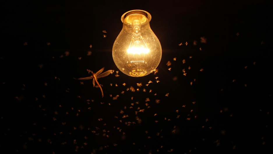 Mosquitoes and a dragonfly fly around a lit bulb on a hot summer in southern Spain.