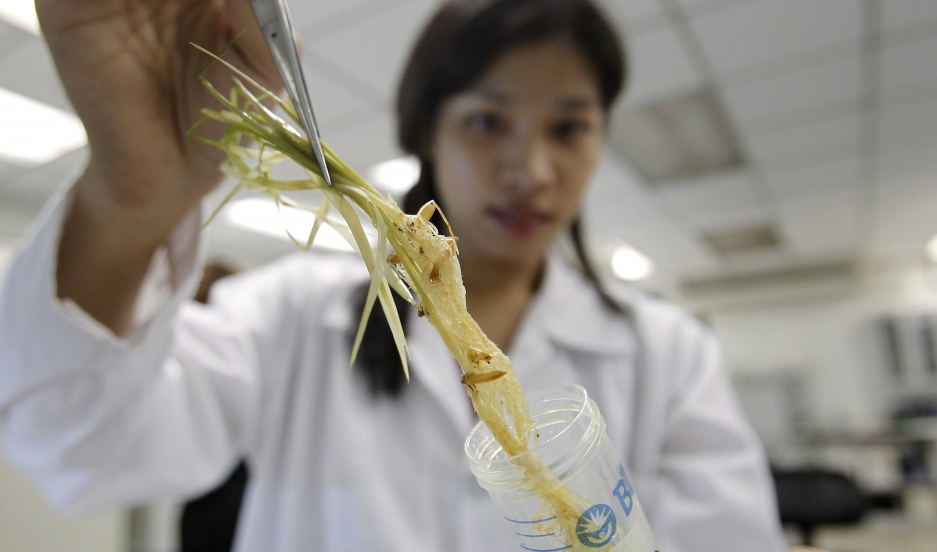 A scientist prepares to scan a root inside a laboratory at the International Rice Research Institute