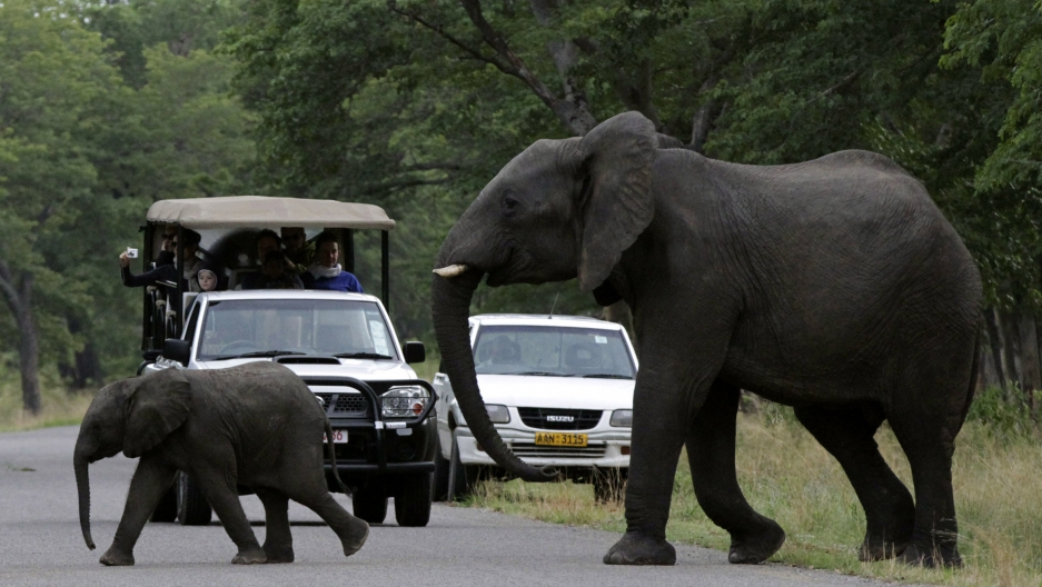 Visitors look on as an elephant and calf cross a road inside Zimbabwe's Hwange National Par