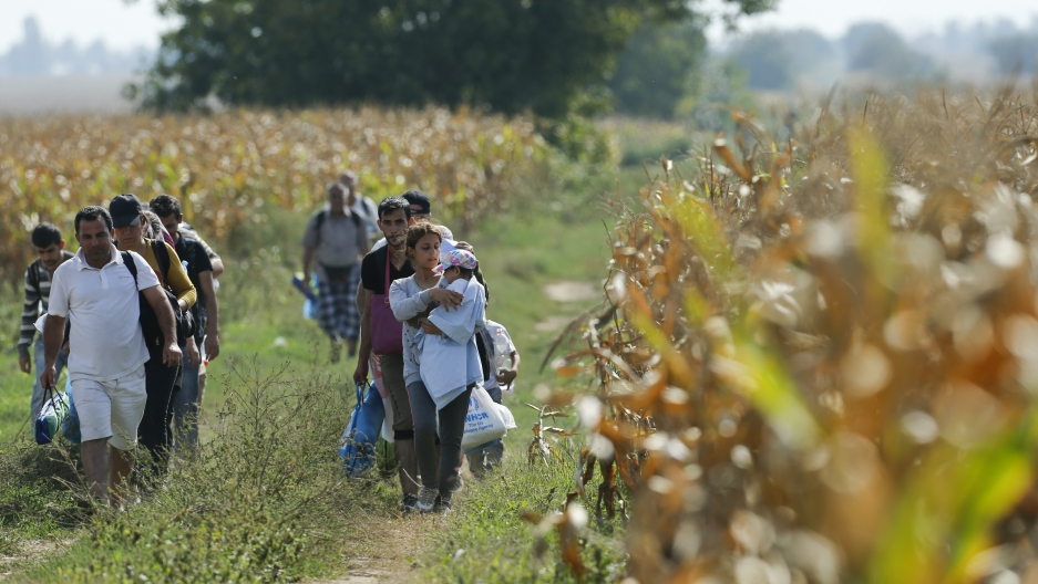 Migrants walking through cornfields near Sid in Serbia, trying to reach Croatia