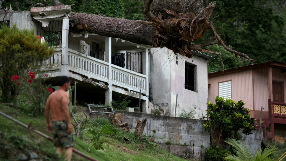 months after hurricane maria slammed puerto rico damage like this fallen tree on a roof - Puerto Rico Christmas