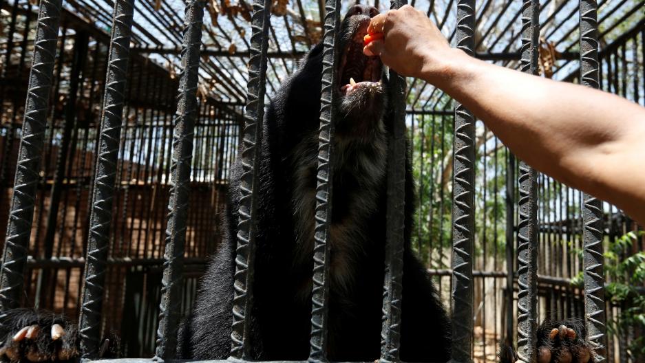 Venezuela Zoo Animals