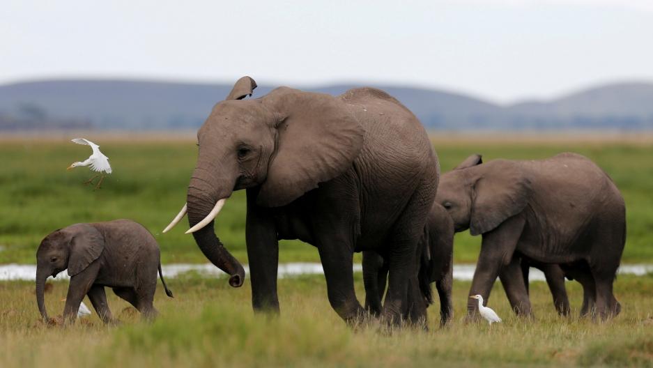 A family of elephants in Kenya's Amboseli National Park.