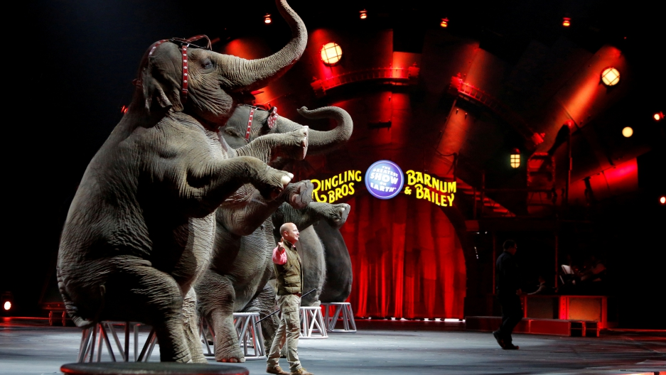 "Elephants perform during Ringling Bros and Barnum & Bailey Circus' ""Circus Extreme"" show at the Mohegan Sun Arena at Casey Plaza in Wilkes-Barre, Pennsylvania, U.S., April 30, 2016."