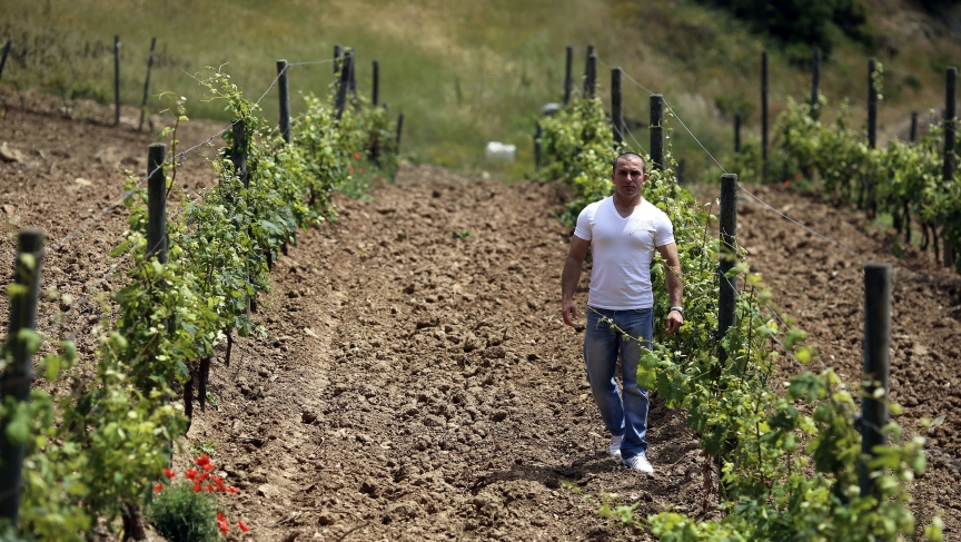 Francesco Papa, a prisoner on the penal colony, walks between rows of grapevines.