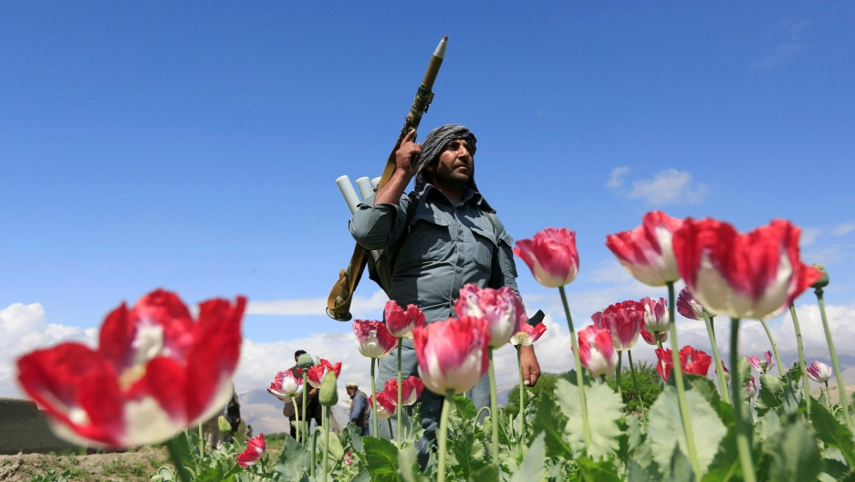 An Afghan policeman destroys poppies during a campaign against narcotics in Jalalabad province, Afghanistan, April 4, 2017.