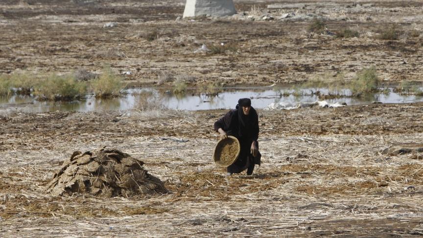 Iraq marshland