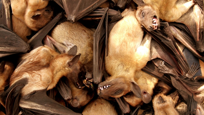Fruit bats are seen for sale at a food market in Brazzaville, Republic of Congo.