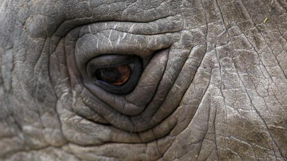 A close-up view of an eye of the Northern White Rhino named Sudan.