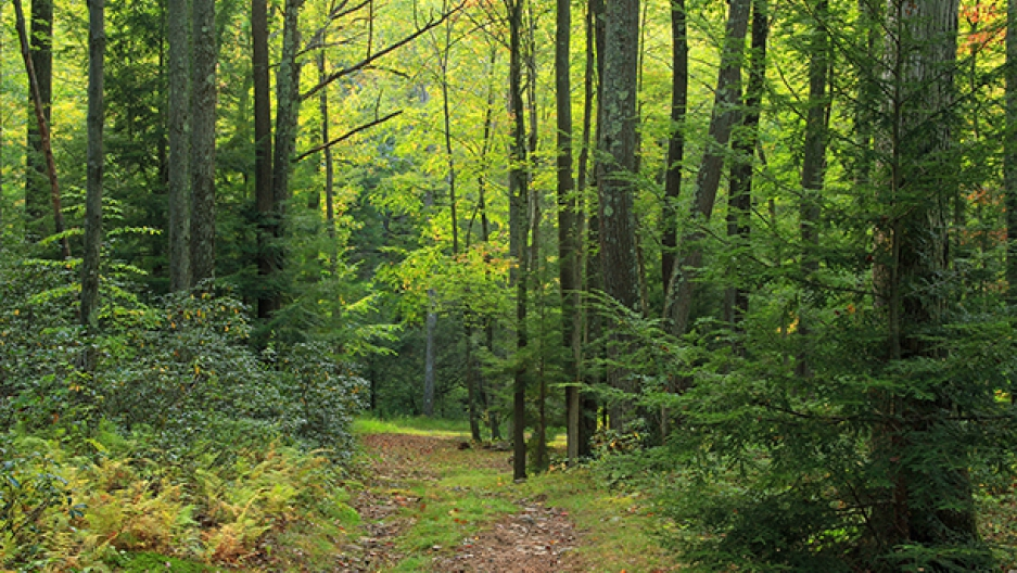 PA forest