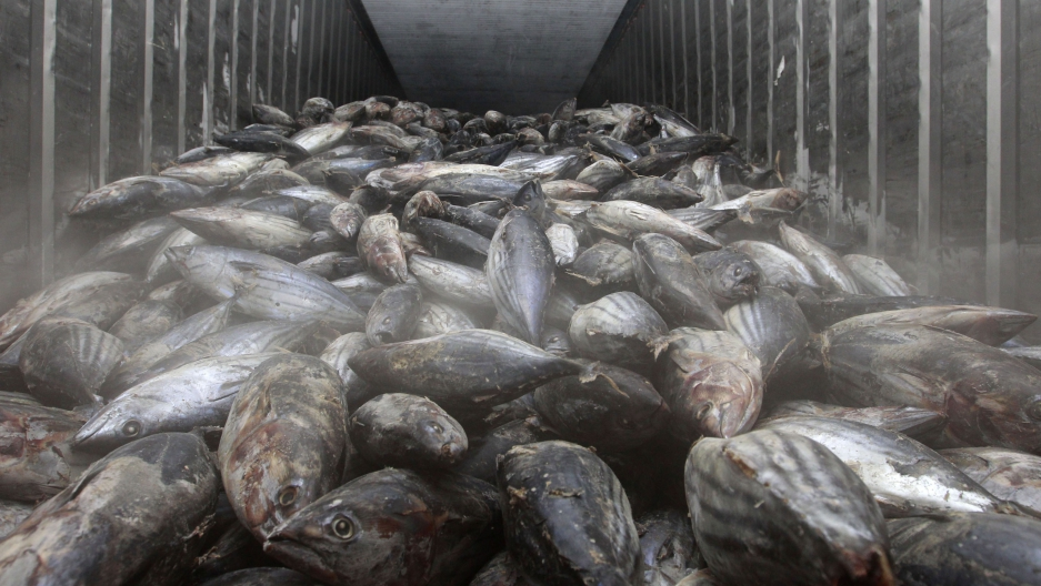 Frozen fish imported from Japan are seen at a storage facility at Ladkrabang customs in Bangkok, Thailand.