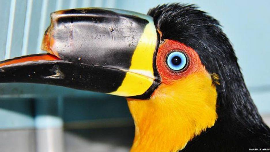 Tieta was rescued from an animal fair in Rio de Janeiro.