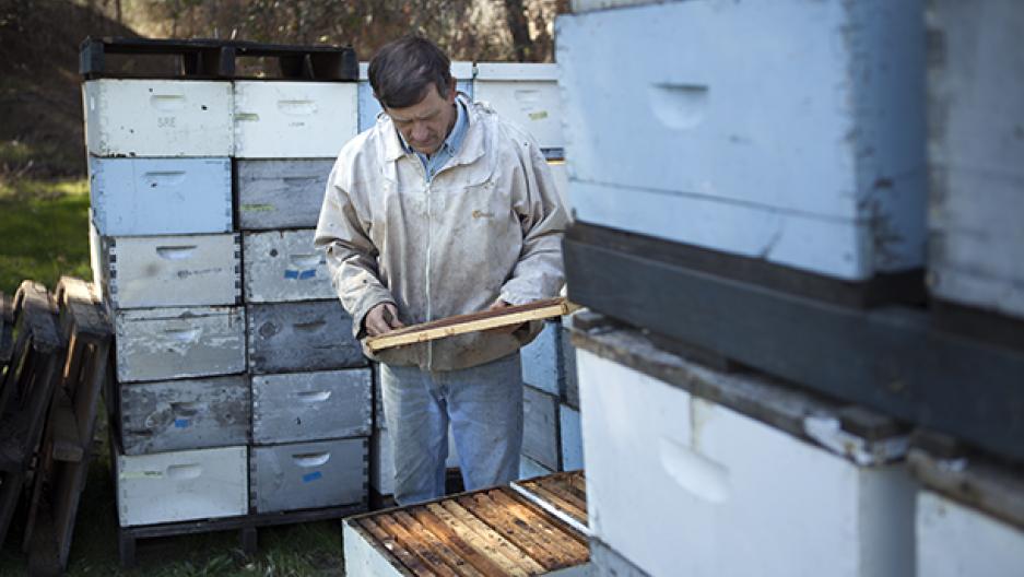 Empty beehives