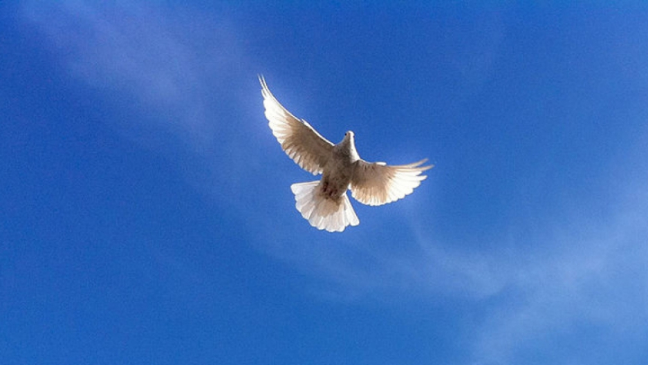 The dove, a symbol of peace, flies over a mosque in Afghanistan.