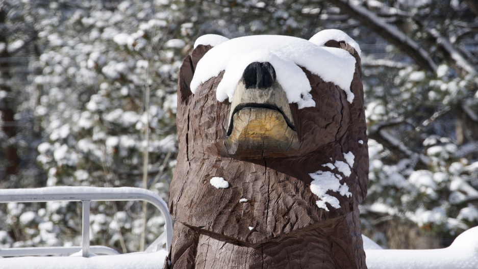 The face of a carved wooden bear