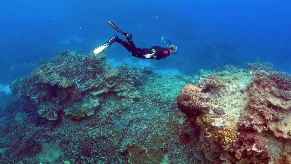 "A man snorkels in an area called the ""Coral Gardens"" near Lady Elliot Island, on the Great Barrier Reef"
