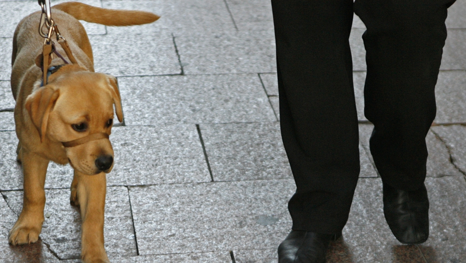 Aaron, a trained guide dog