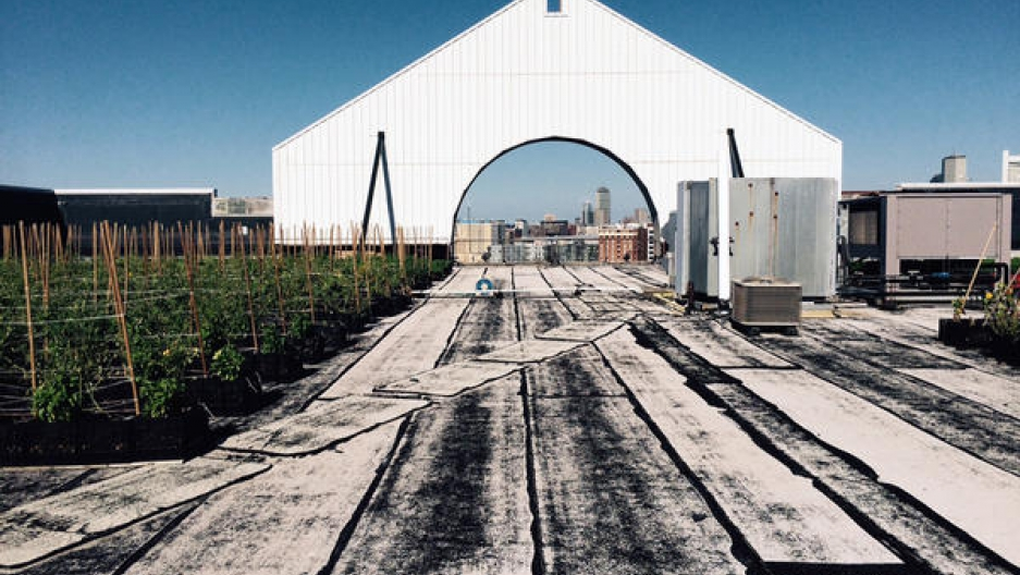 urban farming 1