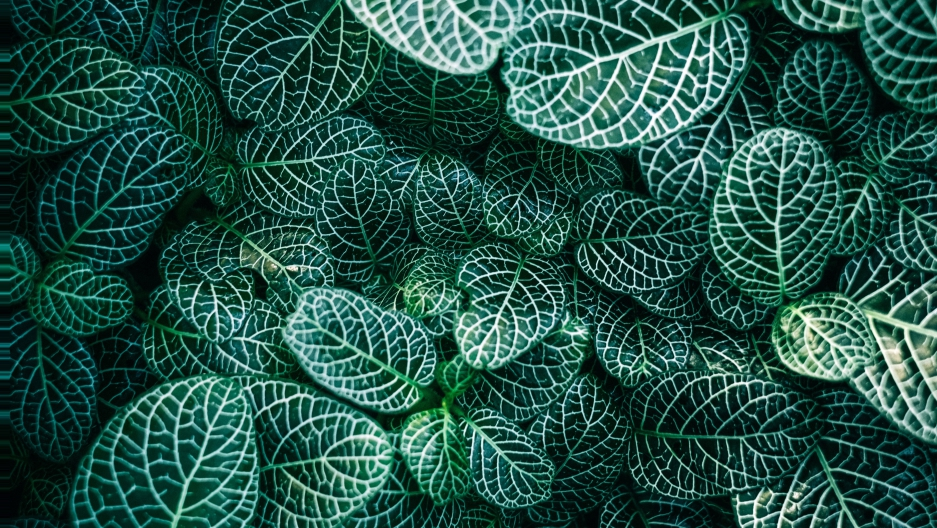 Plants are ramping up photosynthesis, helping absorb all ...