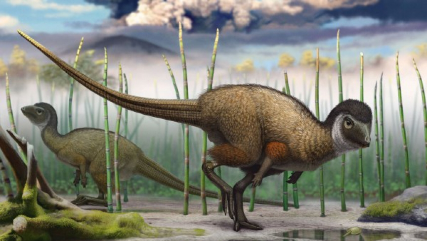 An artist's impression of feathered dinosaurs